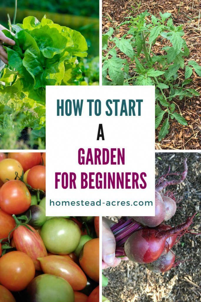 Would you love to grow tasty, organic food for your family? Why not start a vege...