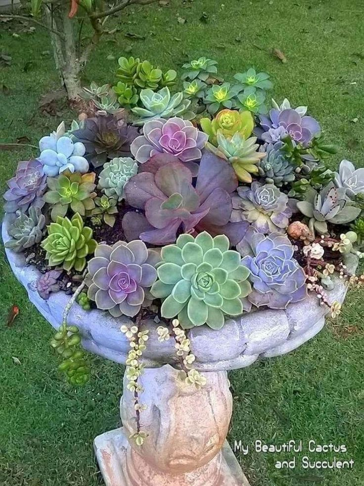 15 Most Beautiful Container Gardening Flowers Ideas For Your Home Front Porch ...