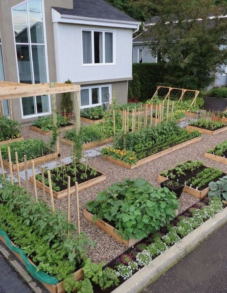 I do and always have wanted an vegetable garden to grow anything from organic fr...