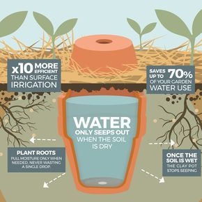 How to make your garden drought proof, using unglazed clay pots. - The Permacult...
