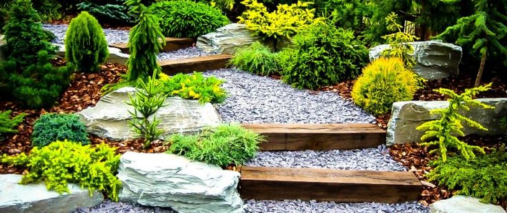 Plants for a Japanese Garden