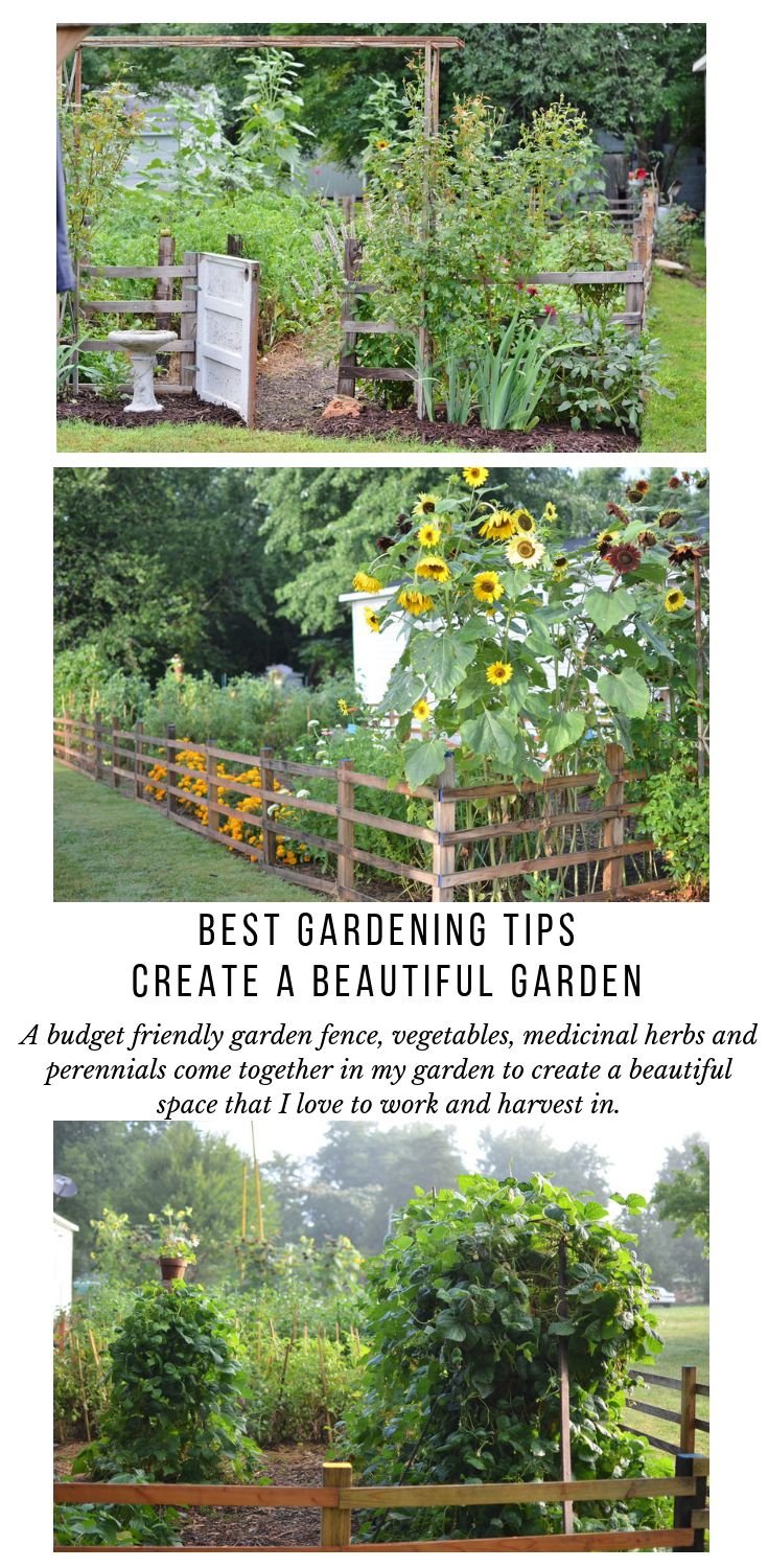 Best Gardening Tips to Create a Beautiful Vegetable Garden Design | Small Backyard Vegetable Garden