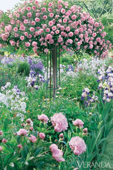 From Single poppies and double peonies to rise standards and swatch of annuals a...