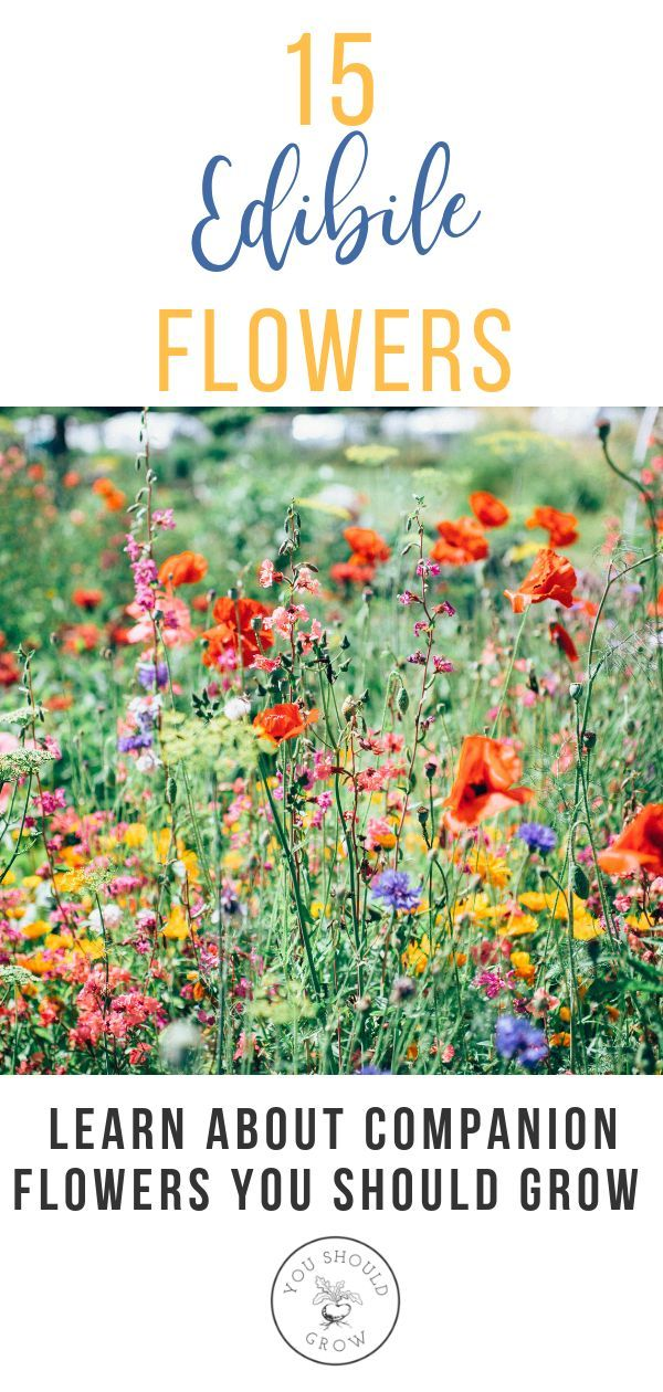If you're growing a vegetable garden, companion planting is a natural and effe...