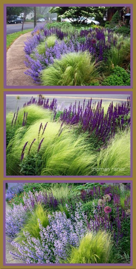 [Oh, what a little purple can do, to compliment ornamental grasses!] Landscaping...