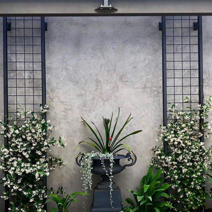 Our new courtyard garden design project- Swanbourne- 3 months on - the simplicit...