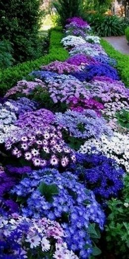 10 low-maintenance perennials for the busy gardener! You can still have beautifu...