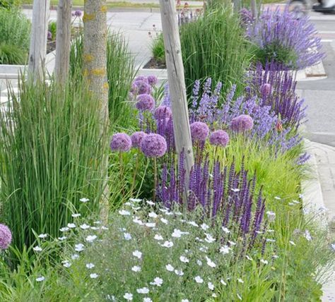 SUSTAINABLE ROMANCE: Love this idea of planting in between the sidewalk and stre...