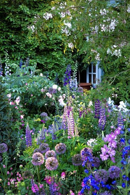 A climber gives height at the back, delphiniums height in the middle ground. Lup...