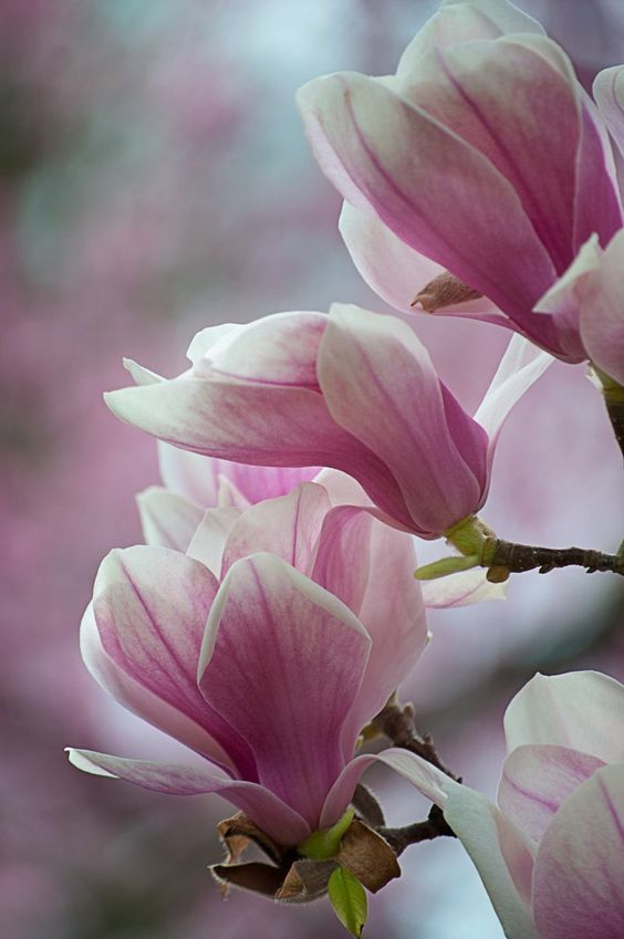 All pink flowers are beautiful and with meanings of their own. So, which do you ...