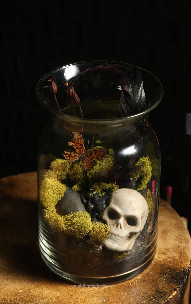 Taxidermy terrarium butterfly antique skull moss vase home decor goth DIY kit. $... - Nenin Decor