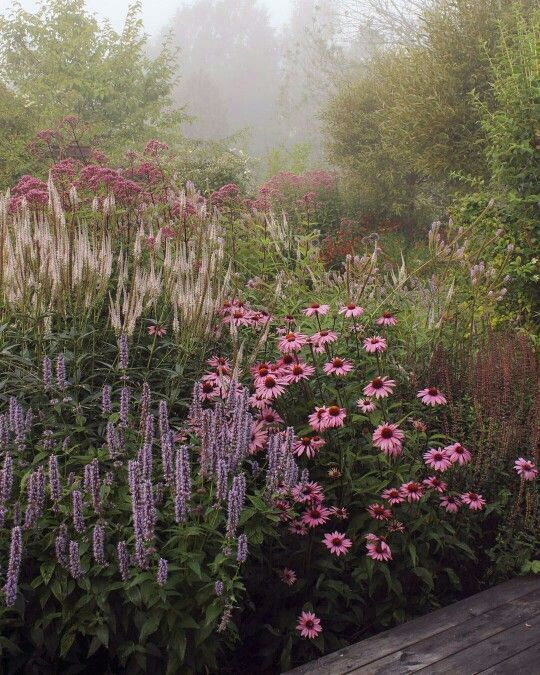 Tom- Like these plants, but they should look clean - agastache, echinacea, sedum and me ...